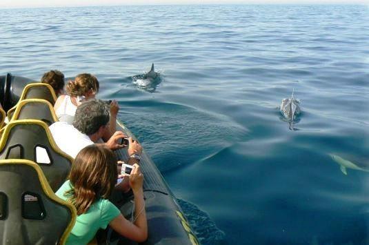 dolphin-sightseeing-goa