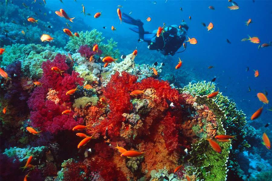 goa-scuba-diving-package
