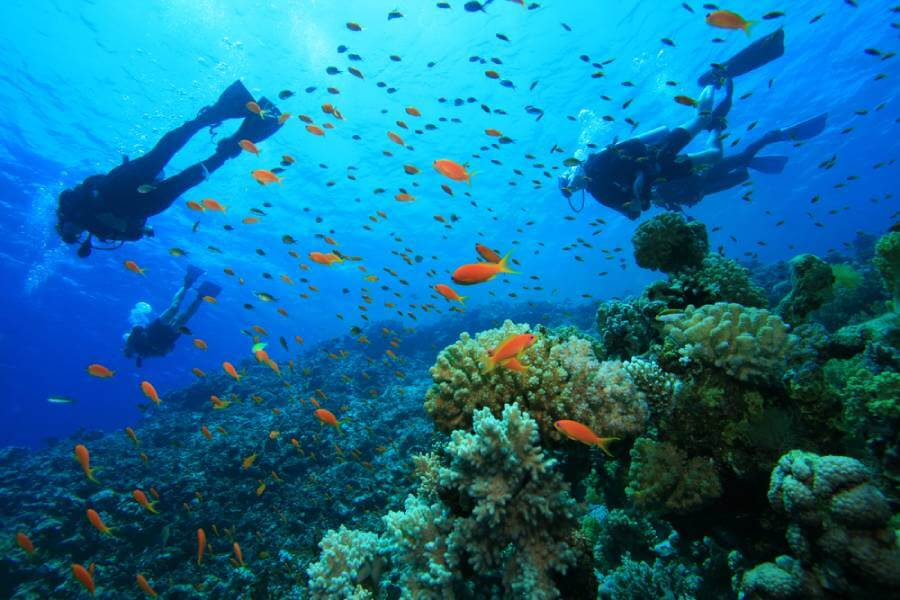 under-diving-in-goa
